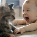 8589130421679-funny-cat-and-baby-wallpaper-hd