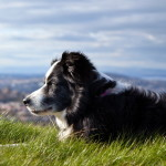 Animals_Dogs_Old_dog_033794_